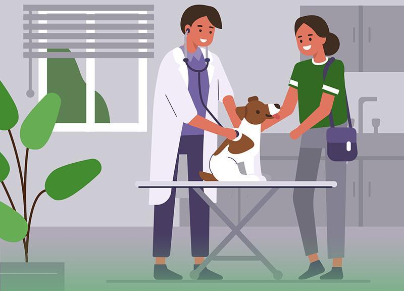 lekarz, pies zwłaścicielem