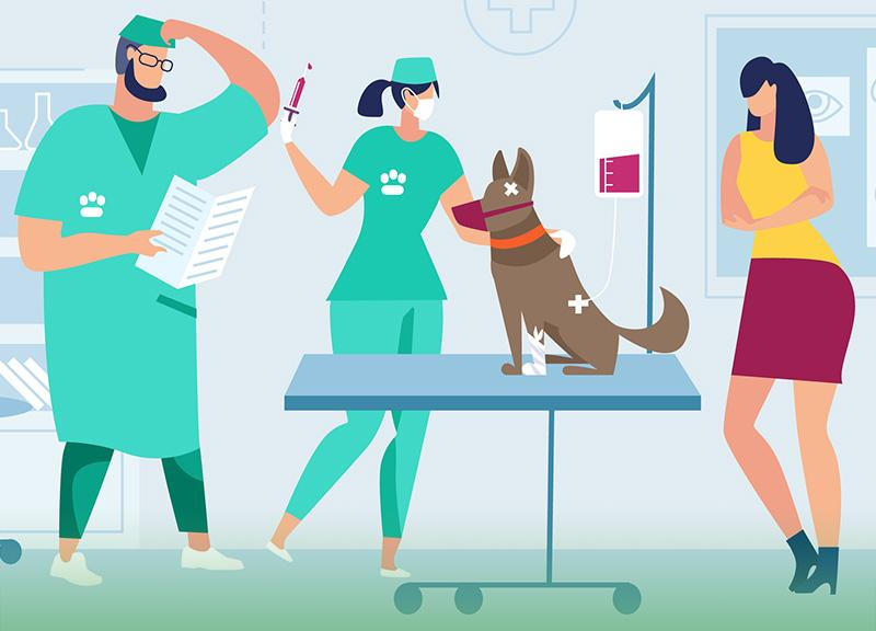 leczenie psa